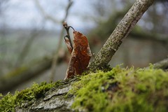 Autumn hanging on (Sundornvic) Tags: nature woods leaves green branches winter brown dead