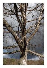 Arbre... (DavidB1977) Tags: france hautsdefrance picardie aisne arbre bouconvillevauclair fujifilm x100f