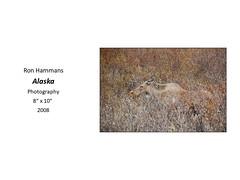 "Alaska • <a style=""font-size:0.8em;"" href=""https://www.flickr.com/photos/124378531@N04/47052357872/"" target=""_blank"">View on Flickr</a>"