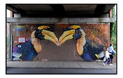 STREET ART by ASPIRE (StockCarPete) Tags: aspire birds birdart streetart londonstreetart urbanart london uk