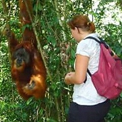 Travel tips The best things to do in 2019 Wild jungle Sumatra Trekking for the school and helping local communities We are a unique trekking experience that aims to protect the biodiversity of the rainforest whilst supporting the local community. Tripadvi (Bukit Lawang - Jungle Trekking) Tags: college dubai amsterdam travel melbourne spain love munchen student indonesia germany china schoolgirl hongkong mexico tourism scotland tourist london paris australia travelblogger friend manchester fashion europe america ireland children switzerland lifestylephotography singapore swiss argentina england adventure sumatra france cheko hawaii sydney sweden university vacations johannesburg netherlands school bukitlawang kidswear vancouver denmark berlin hotel norway tour hike
