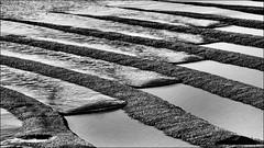 (Phoebus58) Tags: lesconil bretagne mer sable sand marée olympus noiretblanc blackandwhite