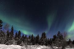 Z19_0206 LT (Zoran Babich) Tags: winter snow lapland lappi finland suomi northernlights auroraborealis
