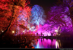 Fairy Woods, Winterlichter, Palmengarten, Frankfurt, Germany (JH_1982) Tags: fairy woods tree trees baum bäume reflections reflection lake see winterlichter palmengarten winter lights light art kunst installation colour color colours colors park garden artistic künstler farbe glow glowing leuchten bridge brücke silhouette silhouettes dunkel dark darkness nacht night nuit noche notte 晚上 夜 ночь beleuchtet beleuchtung lumière luz 光 свет evening abend spooky haunted colorful colourful frankfurt frankfurter francfort fráncfort francoforte meno 美因河畔法兰克福 フランクフルト フランクフルト・アム・マイン франкфурт hessen hesse germany deutschland allemagne alemania germania