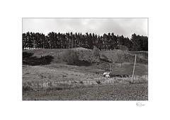 Ridge (radspix) Tags: yashica 230af kyocera af 2885mm f3545 arista edu ultra 100 pmk pyro