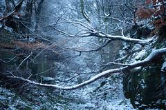 Sideways (J C Mills Photography) Tags: peakdistrict derbyshire stantonmoor woodland trees beech winter snow mist fog quarry landscape