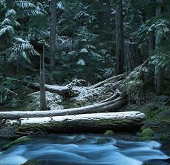 Winter scene along a trail (Zeb Andrews) Tags: kodakportra400 hasselblad500c mthood tamanawasfalls trail hiking oregon wilderness winter landscape film mediumformat pacificnorthwest outdoors