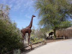 100_1311 (f l a m i n g o) Tags: palmsprings california trip vacation livingdesertzoo animal outside march 29th 2019 beautiful weather friday