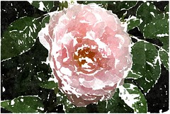 Mein Gott, mein Gott, wie hast du mich (amras_de) Tags: rose rosen ruža rosa ruže rozo roos arrosa ruusut rós rózsa rože rozes rozen roser róza trandafir vrtnica rossläktet gül blüte blume flor cvijet kvet blomst flower floro õis lore kukka fleur bláth virág blóm fiore flos žiedas zieds bloem blome kwiat floare ciuri flouer cvet blomma çiçek zeichnung dibuix kresba tegning drawing desegnajo dibujo piirustus dessin crtež rajz teikning disegno adumbratio zimejums tekening tegnekunst rysunek desenho desen risba teckning çizim