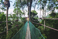 Athlete in action. (Andy @ Pang Ket Vui ( shootx2 )) Tags: athlete bukit gemok fujifilm x100f wclx100ii wide lens tawau borneo forest reserved canopy walk suspension nature green tree