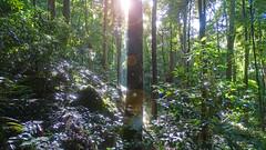 Sunlight (Tony Markham) Tags: missinghamsteps budderoonationalpark kangarooriver wet slippery steep dangerous rainforest fungi fungus pleurotus