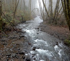 Gales Creek (dinannee) Tags: