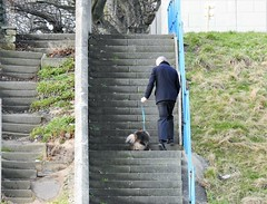 One Man and his 'Stairs Averse' Dog !! (Gilli8888) Tags: nikon p900 coolpix northeast northumberland newbigginbythesea newbiggin man dog stairs steps staircase lines linear coast coastal beach seaside canine