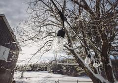 Winter Afternoon - Tenants Harbor Maine (Jonmikel & Kat-YSNP) Tags: maine winter outside backyard snow tenantsharbor lights tree