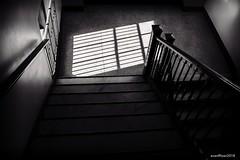 Stairwell (evanffitzer) Tags: stairs fujifilmx100s fujifilm sunlight bw black white mono monochrome museum windowlight bars contrast dark evanfitzer evanffitzer photography photographer posts railings