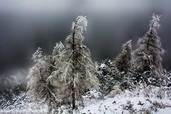Winter (Explored) (A.Nilssen Photography) Tags: tyskland kehlsteinhaus winter trees forest fog mist germany deutschland