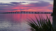 Pretty in Pink (mimsjodi) Tags: sunrise cloudsstormssunsetssunrises marina titusvillemarina titusvillefl water indianriverlagoon sky pink tree palm palmtree bridge amaxbrewerbridge cellphone