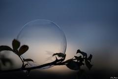 Fragile... (mars-chri) Tags: cristaux gèle bulle soleil ciel lever givre matin prairie hiver valdoise