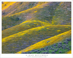 Spring Wildflowers, Temblor Range (G Dan Mitchell) Tags: temblor mountains range hills wildflowers bloom ridge springflowers nature landscape base season california usa north america