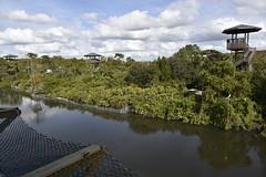 DSC6803 (Starcadet) Tags: orlando alligator krokodil gator gatorland florida glades sumpf zoo hunger tiere fressen nilkrokodil aufzuchtstation