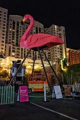 Flamingo! (podolux) Tags: 2019 april2019 sony sonya7 a7 sonyilce7 ilce7 lasvegas nevada nv clarkcounty flamingo roadtrip night nighttime