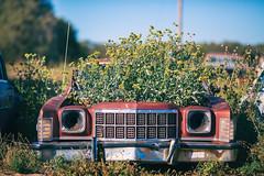 Forunate One (Thomas Hawk) Tags: america oklahoma route66 usa unitedstates unitedstatesofamerica abandoned auto automobile car junkyard tree fav10 fav25 fav50