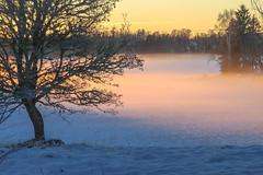 Time for fairies (RdeUppsala) Tags: uppland roslagen fog mist dimma niebla frost escarcha paisaje invierno landscape landskap light luz ljus ricardofeinstein atardecer solnedgång sunset sverige suecia sweden winter vinter
