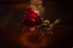 10012019-DSI_4640 (susocl1960) Tags: reflection cristal flor macrofotografia reflejo rosa vela lookingcloseonfriday