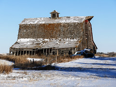 Taken in 2017, but now GONE! (annkelliott) Tags: alberta canada eofcalgary building architecture barn old wooden rural ruraldecay ruralscene abandoned crumbling weathered oldcar field grass snow sky outdoor fall 6november2017 fz1000 panasonic lumix annkelliott anneelliott ©anneelliott2017 ©allrightsreserved 16000photosonflickrasof15january2019