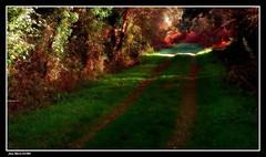 Le Chemin.... 1/2 (faurejm29) Tags: faurejm29 canon sigma paysage nature