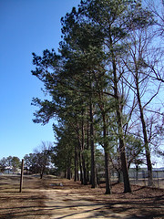 Trees And Walking Trail. (dccradio) Tags: lumberton nc northcarolina robesoncounty outdoor outdoors outside nature natural park citypark lutherbrittpark sony cybershot dscw230 january winter saturday afternoon saturdayafternoon goodafternoon tree trees treebranch branch branches treelimb treelimbs sky bluesky path road walkingpath trail muddy mud puddle