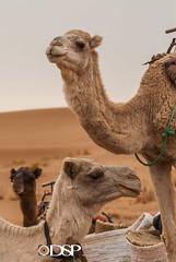 Morocco (David Simchock Photography) Tags: 2006 africa davidsimchock davidsimchockphotography dijoncreativesolutions morocco nikon saharadesert vagabondvistas clientequatorialtravel image photo photograph photography travel travelphotography