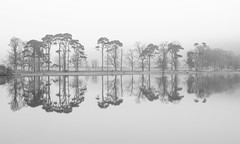 Misty reflection (Alf Branch) Tags: refelections reflection tree trees mono westcumbria water blackandwhite whiteandblack monochrome alfbranch landscape lakes lakedistrict lake lakesdistrict cumbria mist fog olympus omd olympusomdem5mkii zuiko1240mmf28pro lowcontrast hiresmode hikey