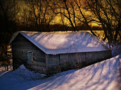 Henry's Shed (Dave Linscheid) Tags: winter snow cold tree deepsnow building outbuilding texture textured picmonkey mtlake mn minnesota usa cottonwoodcounty