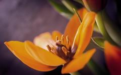 fleur (Laurent Hutinet) Tags: fleur macro plante eos6d nature
