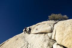 Joshua Tree #2 - Tourists (Alan Headland) Tags: joshuatree desert trees sand rocks mountains sky