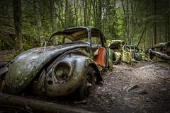 den eviga kön (FanFan Babii or just plain Buffan) Tags: sweden cue båstnäs cars decay forgotten abandoned junkheap junkyard junk junkcar vw