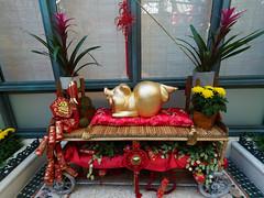 New year golden piglet (wirehead) Tags: em5mk2 918mm lasvegas venetian vacation travel pig