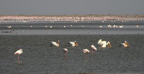 1713ex avian paradise