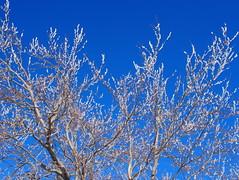 zúzmara / frost (debreczeniemoke) Tags: tél winter hó snow túra hiking erdő forest fa tree hegy mountain gutin gutinhegység gutinmountains ég sky zúzmara rime frost olympusem5