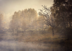 Autumn Mood. (Scott Robertson (Roksoff)) Tags: lochtulla rannochmoor glencoe bridgeoforchy scottishhighlands scotland autumn mist trees lochan water sky frozen landscape mood atmosphere outdoors nikond810 70200mmf28 leefilters