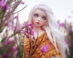 Where the wild flowers grow (pure_embers) Tags: pure embers laura england resin bjd msd jid junior doll dolls iplehouse cordelia uk girl iplehousecordelia pureembers embersmisha misha photography photo ball joint white alpaca hair ghost eyes portrait flowers cloudy mustard meadow
