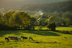 20180505-Canon EOS 6D-8564 (Bartek Rozanski) Tags: briscol luxembourg belgium ardennes belgie belgique ardennen spring erezee valley forest house farm cow pasture agriculture