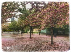 Milano - Primavera/Autunno 2019 (iw2ijz) Tags: milano via moscova alberi trees primavera street photography iphone apple iphonex