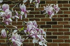 Springtime in Columbus (Paul B0udreau) Tags: nikkor1855mm photoshop canada ontario paulboudreauphotography niagara d5100 nikon nikond5100 layer columbus ohio