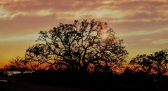 Winter sunset in Texas (elnina999) Tags: pixelphonephotography mobilephotography sunset sundown red tree silhouette contrast flare clouds dusk weather sky horizonline colorful bright outdoors view panorama texas winter