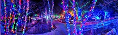 View from the Bugarium (JoelDeluxe) Tags: rol riveroflights abq biopark nm december 2018 albuquerque biological park pnm light display colors lights sculptures fantasy newmexico hdr joeldeluxe