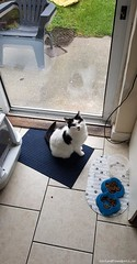 Fri, Jan 11th, 2019 Lost Female Cat - Moyclare Close, Baldoyle, Dublin (Lost and Found Pets Ireland) Tags: lostcatmoyclareclosedublin lost cat moyclare close dublin january 2019