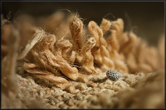Towel's ways... (Altazur) Tags: towel cloth macromondays wool landscape microlandscape closeup macrophotography