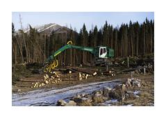 Malga Cambroncoi, 2019 (Mariano Tais) Tags: sony a7ii sonya7ii a72 55 18 sel55f18z disastro schianti alberi trentino valle mocheni